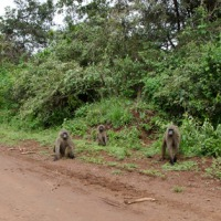 Baboons, elephants and game parks in Kenya (East Africa: Part 1)