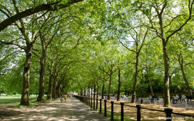 Green Park, London. Copyright Ngaire Ackerley, 2013