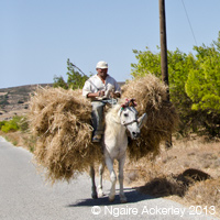 One of the many passer-bys during our road trip around Naxos