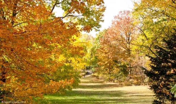 Autumn Foliage in Prospect Park, USA