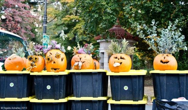 Pumpkins at a Market near Prospect Park