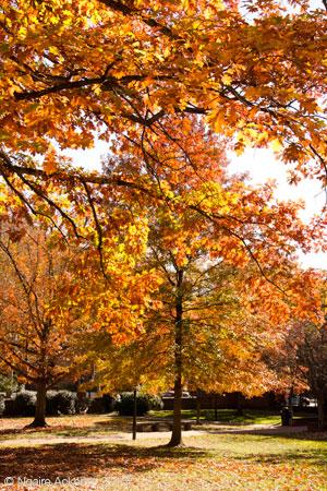Autumn Fall in Philadelphia