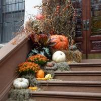 Halloween pumpkin hunting!