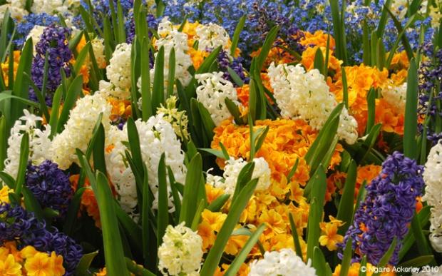 Flowers in Regents Park