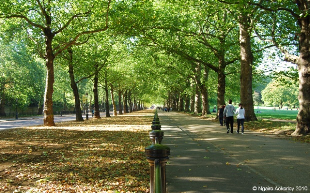 The pathway in Green Park, the parks in London make it livable for someone who misses nature