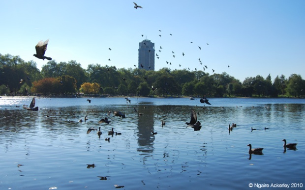 Birds in Hyde Park - walking through the parks always makes me happy in London