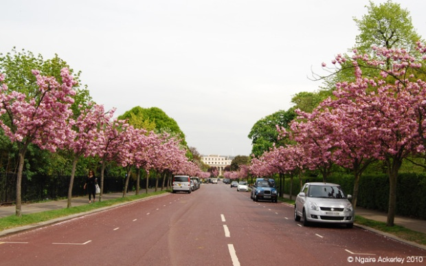 Road near Regents Park in London