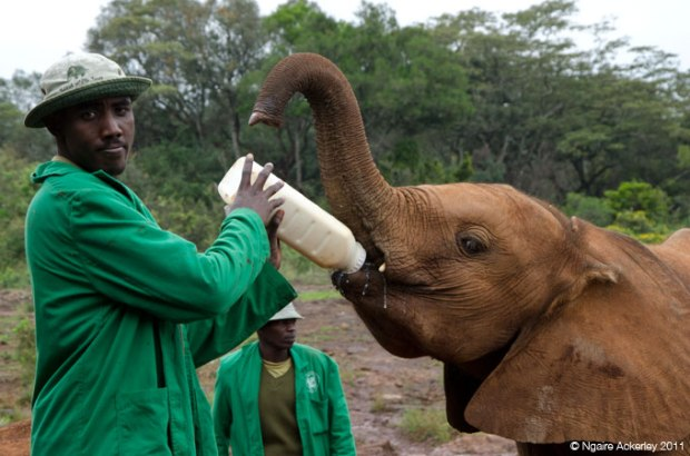 A baby elephant being fed at an elephant orphanage in Nairobi, Kenya