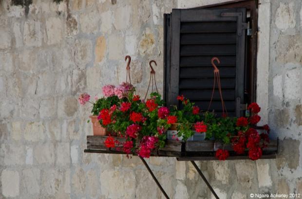 Flowers on a window ledge, Dubrovnik, Croatia