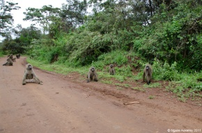 Taking the road less travelled, Nairobi, Kenya
