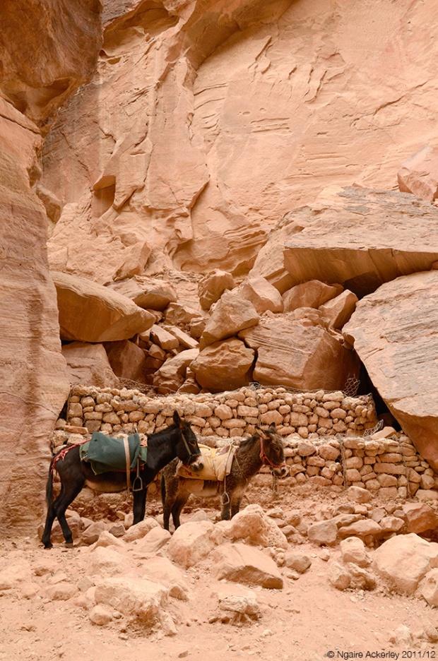 Donkeys, Petra. Jordan