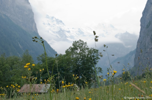 Valley from the ground, Lauterbrunnen, Switzerland
