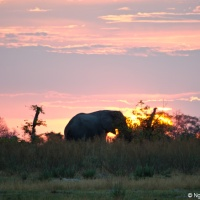 Going bush in the Okavango Delta of Botswana