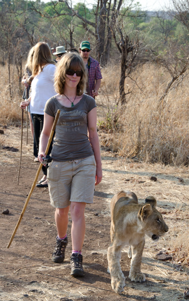Walking with the lions