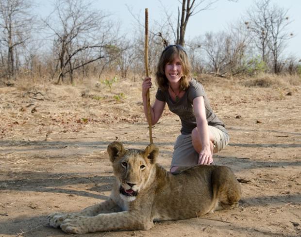Lion walk, Zimbabwe