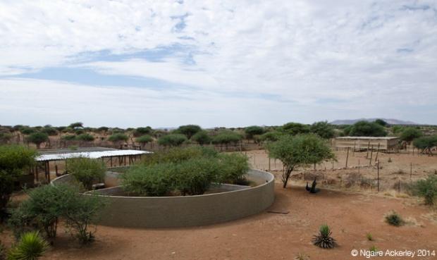Meerkat area