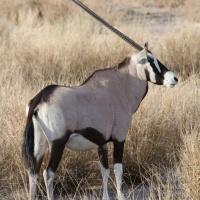 Etosha National Park, wildlife galore