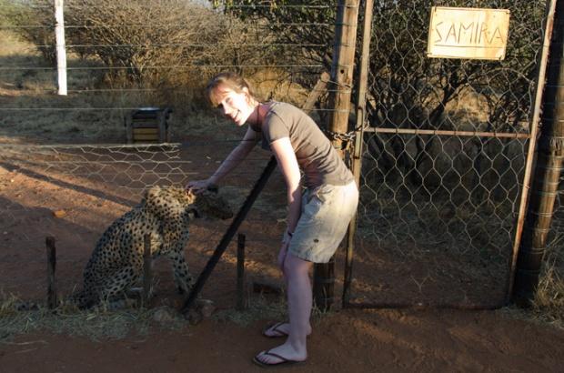 Samira, cheetah