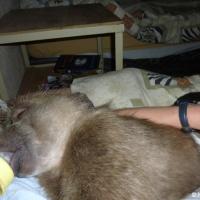 Babysitting a baby baboon