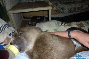 Violet sleeping