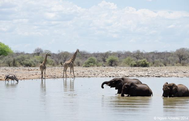 Waterhole in Etosha National Park