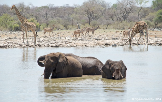 Animals in a waterhole