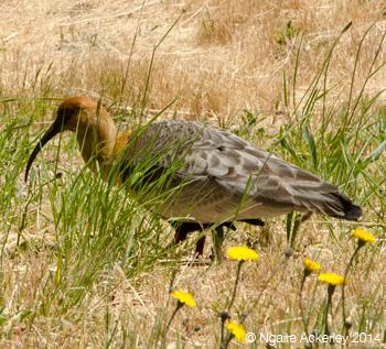 Bird near the beach in Bariloche
