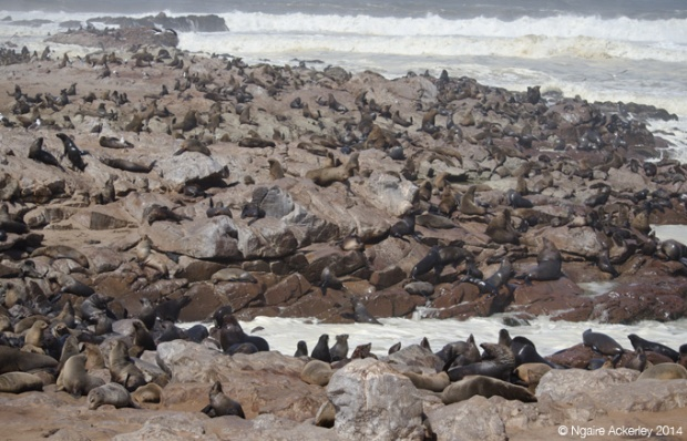 The landscape of Cape Cross's Fur Seals