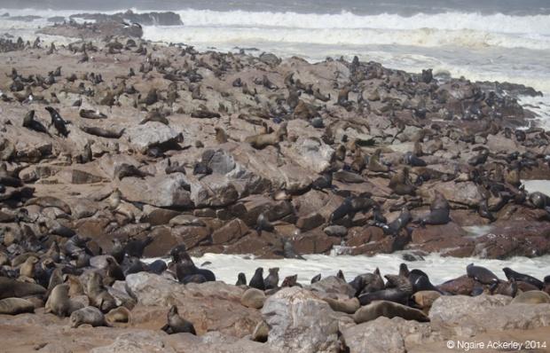 The landscape of Cape Cross's Fur Seals