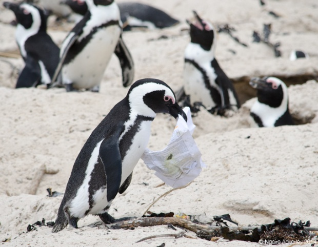 Penguin that found paper