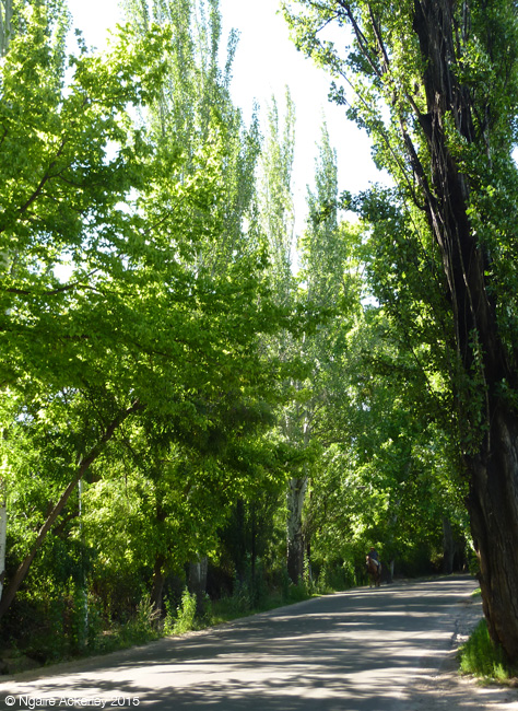 Cycling through Mendoza