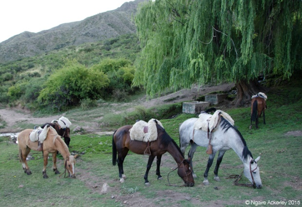 Horses in the Andes - mine was the dark brown one
