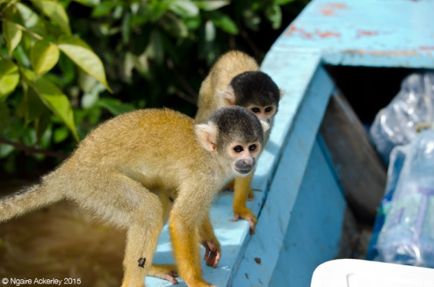 Squirrel monkeys in our boat