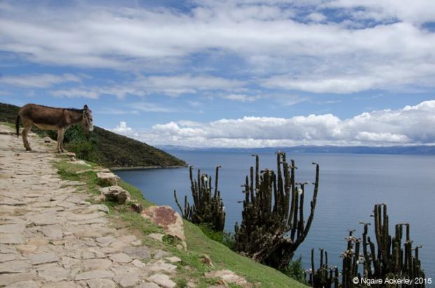 Isla del Sol, North