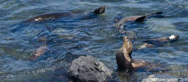 Sea lions in the harbour