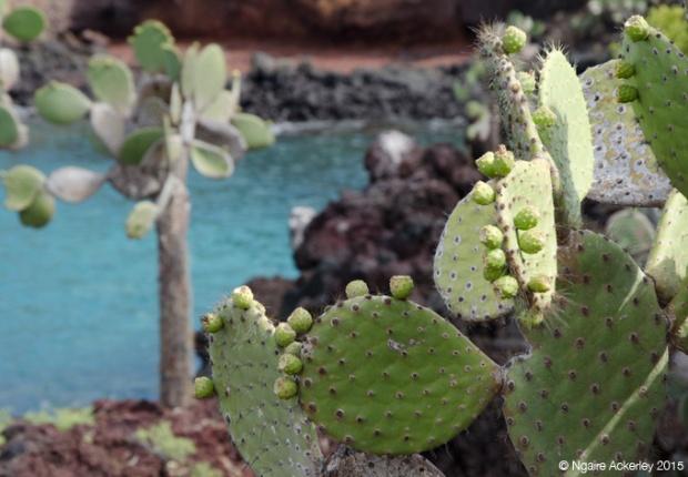 Cactus Rabida Island