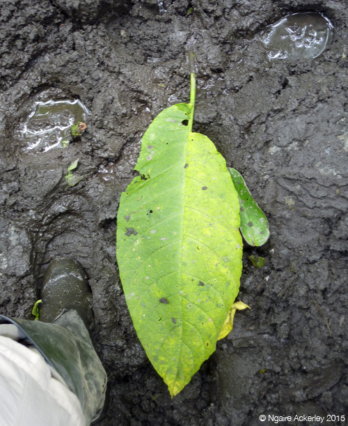 Giant leaf on track