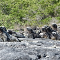 Cruising Around the Galapagos: Part 3 - Fernandina and Isabela Island