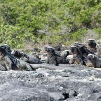 Cruising Around the Galapagos: Part 3 - Fernandina and Isabela Island