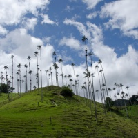Salento, Valle de Cocora Palms and the Coffee Region