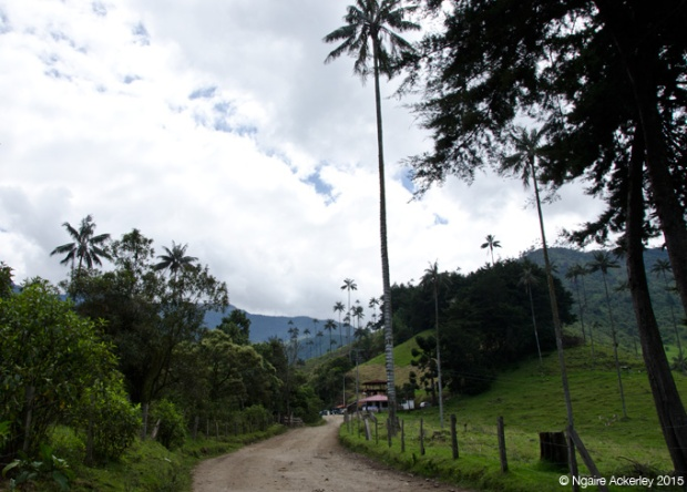 Start of the hike through Valle de Cocora