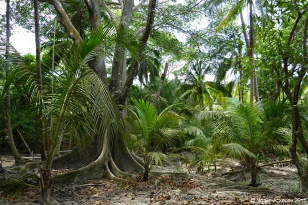 Walking through Tayrona National Park