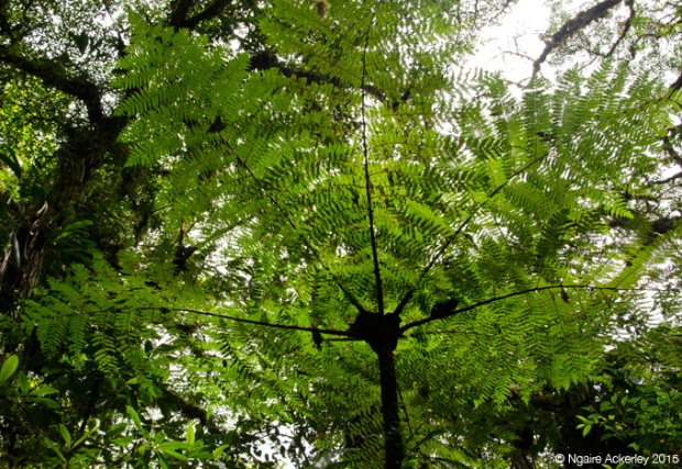 Santa Elena National Park
