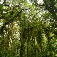 Monteverde and Santa Elena: Cloud Forest of Costa Rica