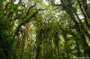 Santa Elena National Park, Monteverde