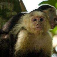 Seeking wildlife in Manuel Antonio National Park, Costa Rica