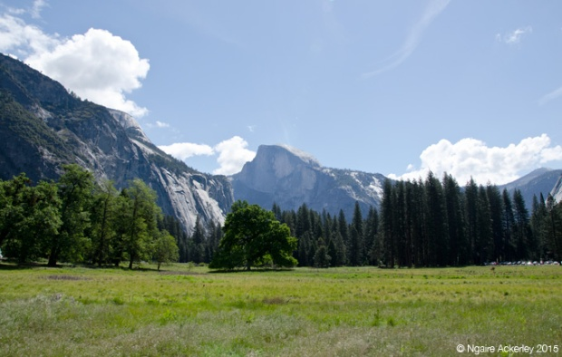 Half Dome, Yosemite Valley Floor - the first shot I took when I arrived
