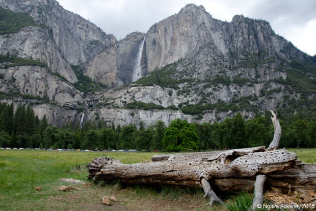 Yosemite Falls in distance