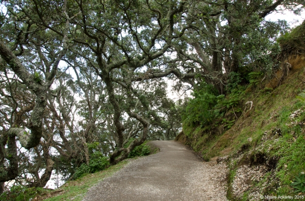 Walkway around Mt. Maunganui
