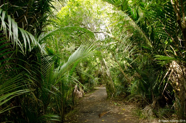Path to Kitekite Falls